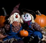 Free Photo - Pumpkins and Dolls