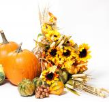 Free Photo - Fall cornucopia on a White background
