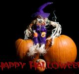 Free Photo - Halloween with Text
