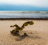 Free Photo - Algae in harsh winds