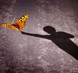 Free Photo - Shadow of a little boy touching a butterfly