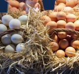 Free Photo - Eggs at the Market