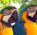 Free Photo - Parrots Macaws