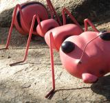 Free Photo - Large Ant Model