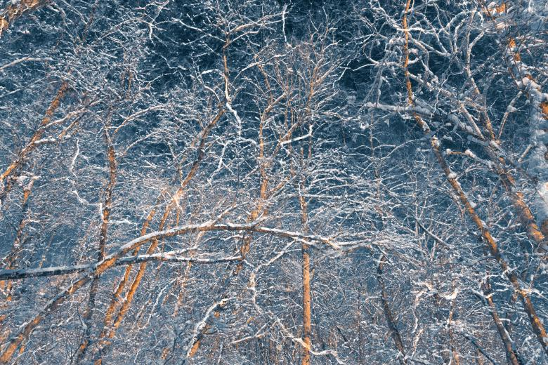 Susquehanna Forest Blizzard - Free Forest Stock Photos