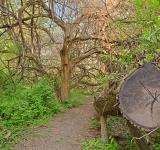 Free Photo - Chopped Wood Trail - HDR