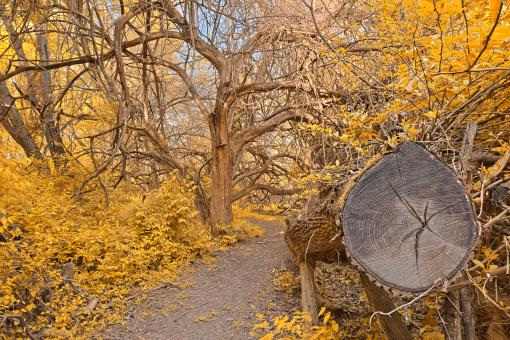 Chopped Wood Trail - Gold Fantasy HDR - Free Stock Photo