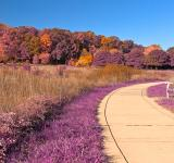 Free Photo - Winding Lavender Fantasy Path - HDR