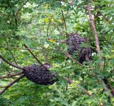 Free Photo - Wasp Nests
