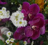 Free Photo - Daisy and Orchid Flower Arrangement
