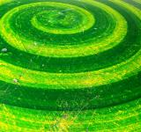 Free Photo - Green Spiral Background