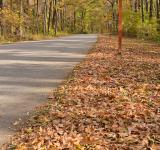 Free Photo - Winding Autumn Road - HDR