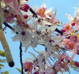 Free Photo - Pink Cherry Blossom