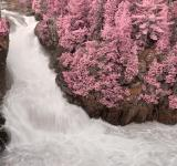 Free Photo - Dorwin Falls - Pink Fantasy HDR