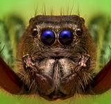 Free Photo - Close up jumping spider