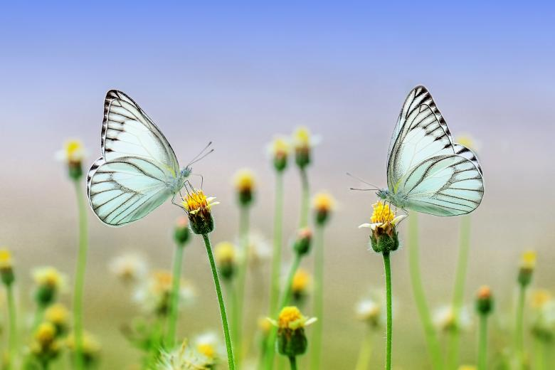 Free Stock Photo of White butterfly on a flower Created by Ronny Overhate