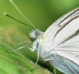 Free Photo - Close up white butterfly