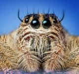 Free Photo - Close up jumper