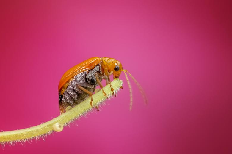 Tiny bug on a branch Free Insect Stock Photos