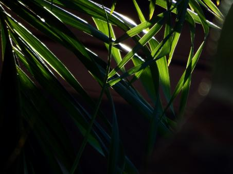 Sunlight Shining through the Tropical Forest - Free Stock Photo