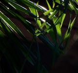 Free Photo - Sunlight Shining through the Tropical Forest