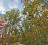 Free Photo - Winding Autumn Forest Road  - HDR