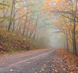 Free Photo - Misty Autumn Forest Road - HDR