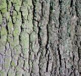 Free Photo - Oak bark texture