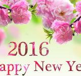 Free Photo - Happy New Year 2016