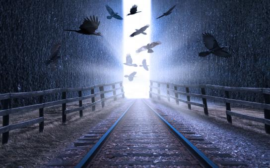 Birds over train tracks - Free Stock Photo