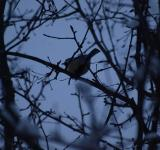 Free Photo - Winter bird