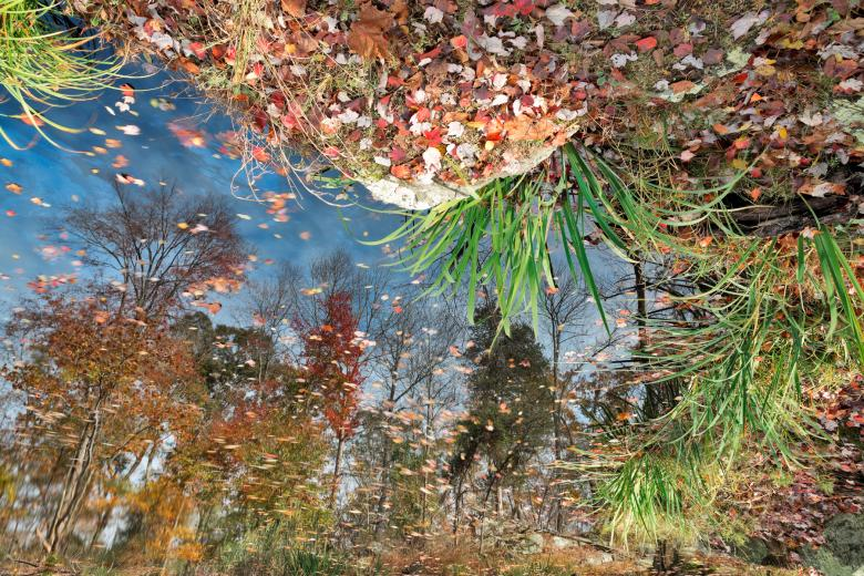 Free Stock Photo of Autumn Pond Reflections Created by Nicolas Raymond