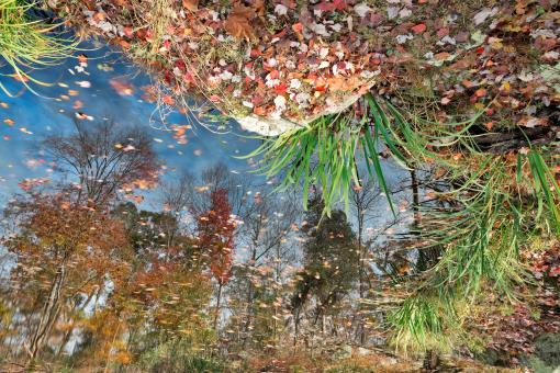 Autumn Pond Reflections - Free Stock Photo