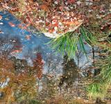 Free Photo - Autumn Pond Reflections