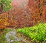 Free Photo - Vibrant Autumn Trail - HDR