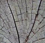 Free Photo - Aged cracked wood