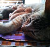 Free Photo - The Cat Family 2