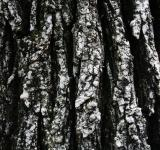 Free Photo - Tree Bark Texture
