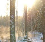 Free Photo - Frozen forest