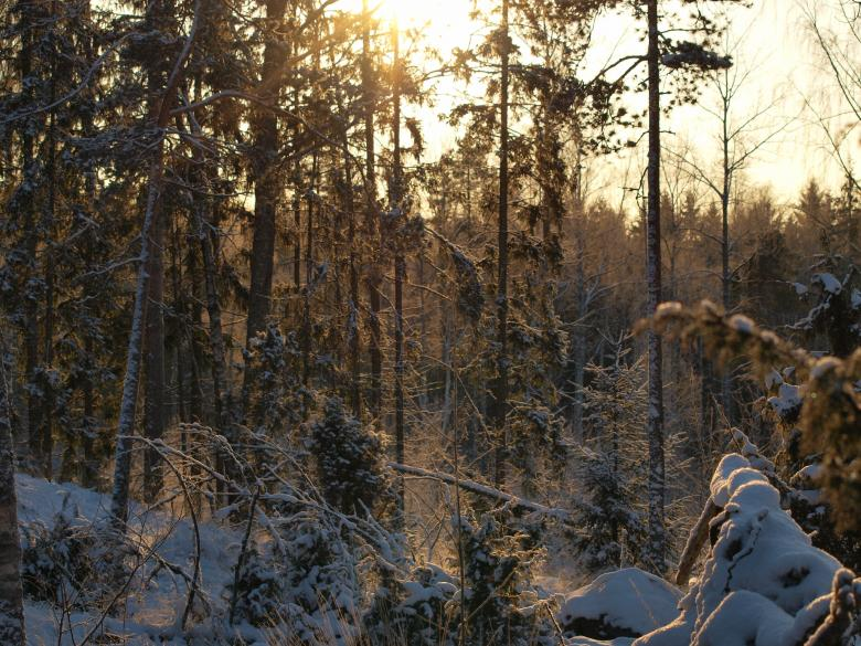 Free Stock Photo of Frozen forest Created by Marko Mäkinen
