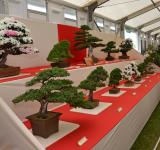 Free Photo - Bonsai display
