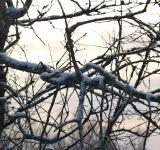 Free Photo - cold winter