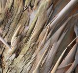 Free Photo - Spinning Gum bark
