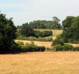 Free Photo - English fields and trees - Suffolk