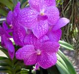 Free Photo - Orchids