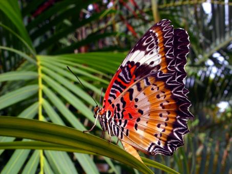 Orange Lacewing Butterfly - Free Stock Photo