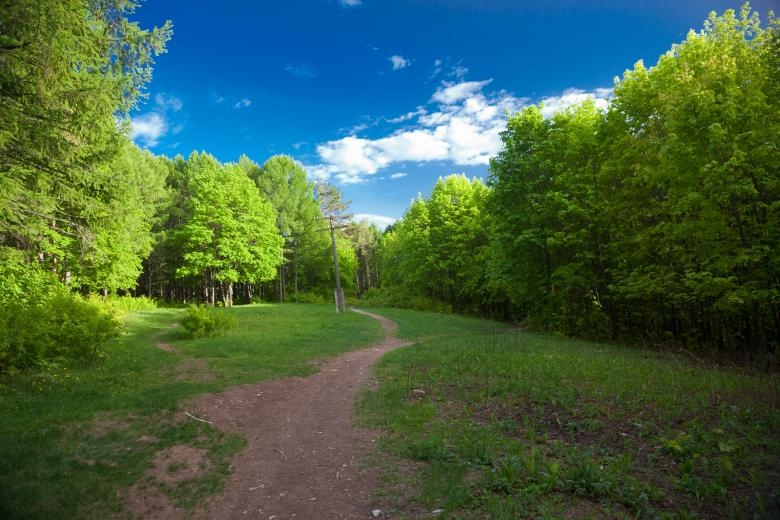 Green Trees - Free Forest Stock Photos