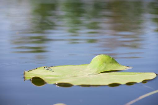 Leaf on water - Free Stock Photo