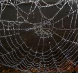 Free Photo - Dew soaked spiders web