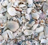 Free Photo - Broken seashell texture